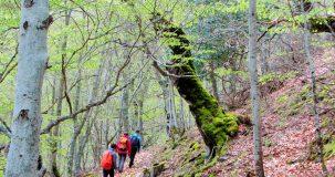 1-Senderismo-y-Rutas-de-Montaña-en-Ezcaray----La-Rioja-(7)