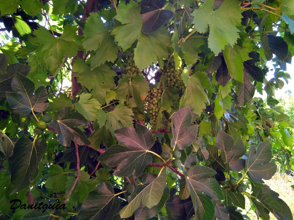 Naturaleza curiosa en la Rioja