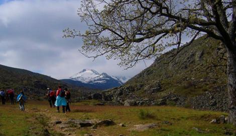 PICO EL CERVUNAL (2.443 m)